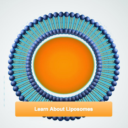 learn about liposomes