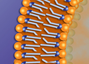 Phospholipids in formation