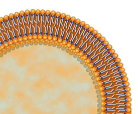 Liposome cutaway showing bilayer structure