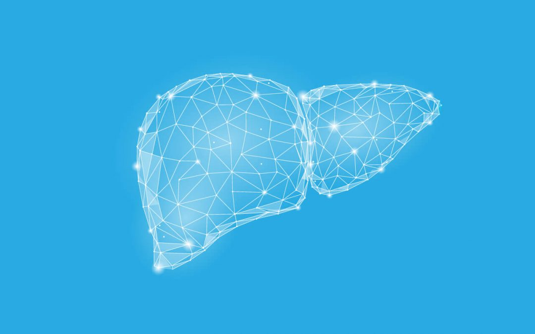illustration of the liver on a blue background to show its shape