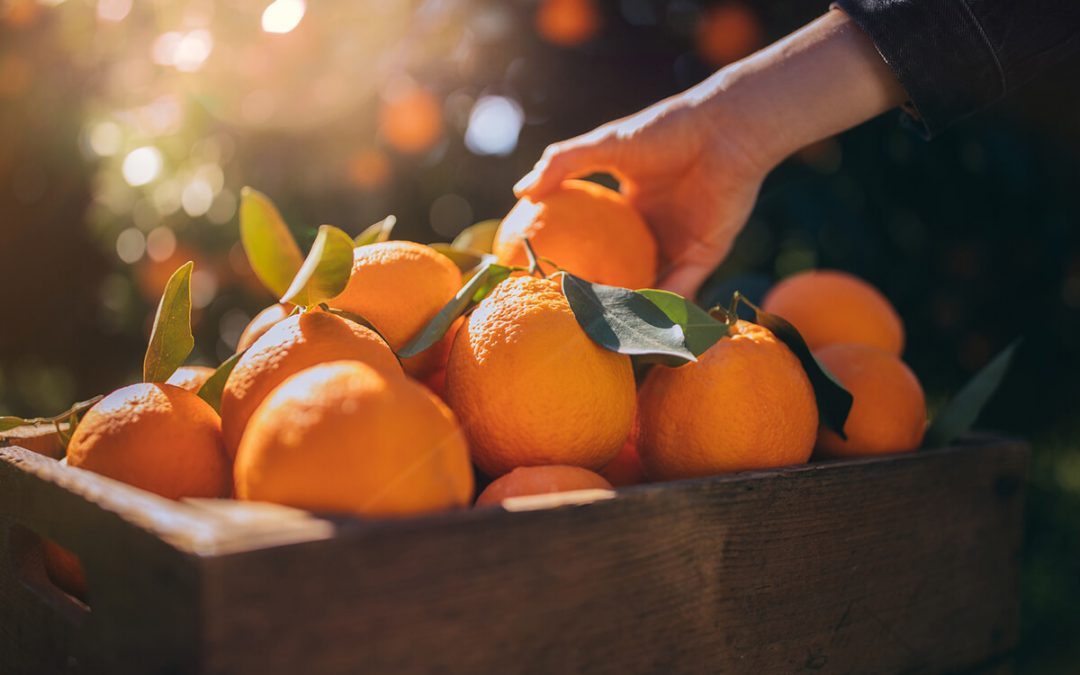 hand reaching into a box of oranges, enough to meet the recommended vitamin c dosage