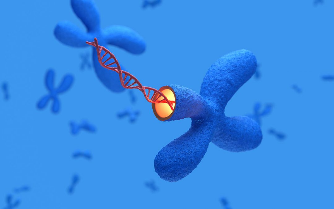 X Chromosomes with DNA molecules