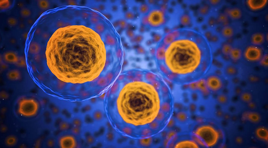 illustration of human cells