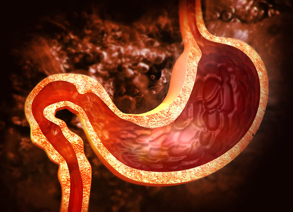 illustration of stomach